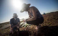 Researchers collect seaweed at the tide pools
