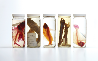 Organisms from the Oceanographic Collections