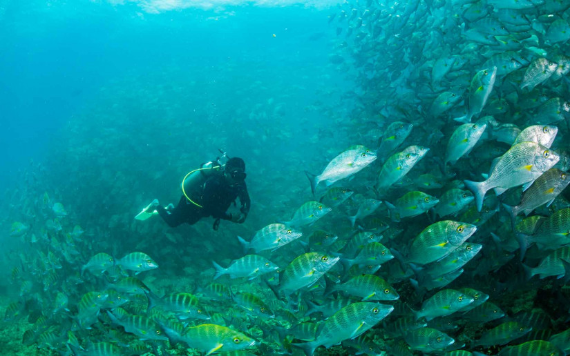 Mexico an Emerging 'Beacon' for Ecotourism Thanks to Pristine Dive Sites