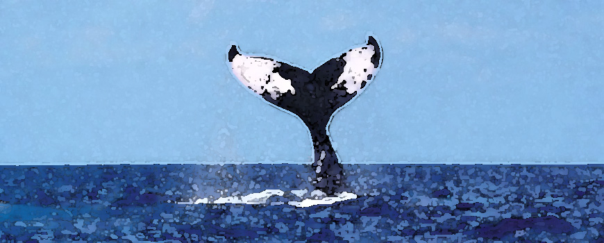 Stylized image of a whale tale