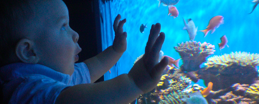 A toddler looks into a tank at Birch Aquarium at Scripps