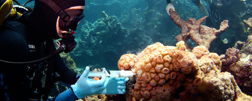 coral reef health