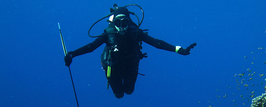 Diver holding a long, spear-like pole