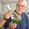 Professor Gerwick examining a beaker of algae