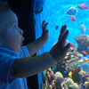 Child looking at fish tank