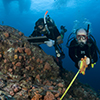 Center for Marine Biodiversity and Conservation students take measurements of coral reef growth