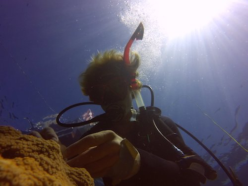 Courtney taking a coral sample in bermuda. Photo by Andreas Andersson.