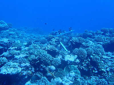 Stereovideo cameras deployed by Scripps and French research center CRIOBE, such as at this station in French Poynesia,  allow countries with less access to resources to monitor biological diversity in their territorial waters.