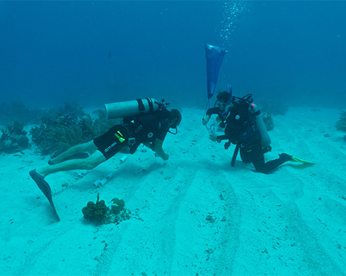Photo of graduate student Nastassia Patin collecting sediments from which Salinispora were isolated (photo credit Greg Rouse).