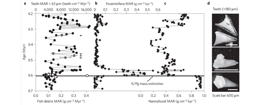 Central Pacific comparison of mass accumulation rates for different trophic groups