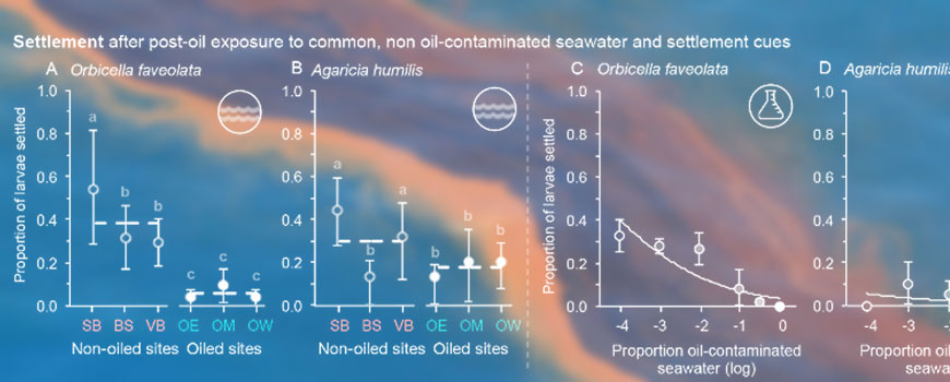 Mean settlement of (A)  Orbicella faveolata and (B)  Agaricia humilis larvae
