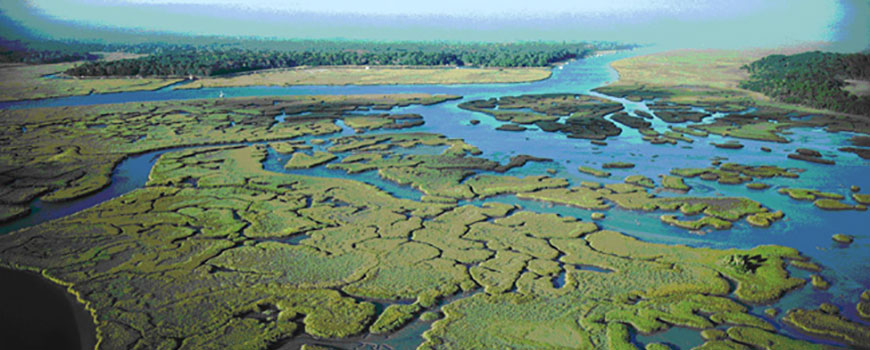 Greenery among wetlands, photo courtesy NOAA