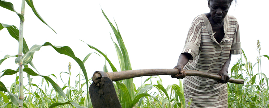 Lack of infrastructure makes many of Africa's farmers directly dependent on rainfall to sustain crops.