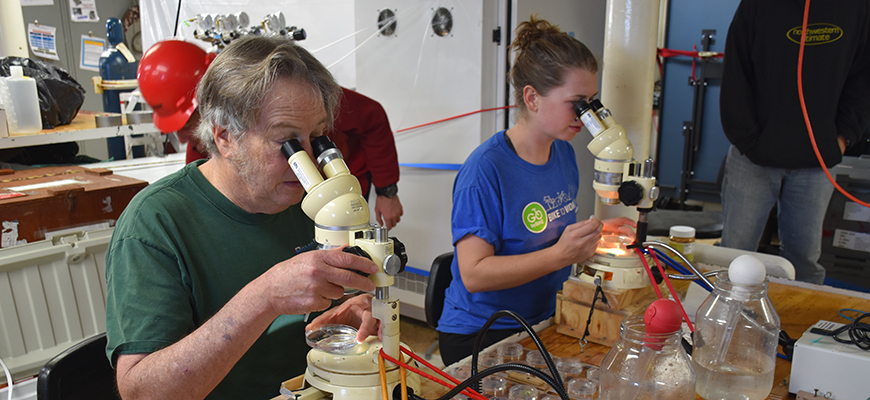 Biological oceanographer Mark Ohman and student Stephanie Sommer sort copepods during CCE-LTER cruise this summer
