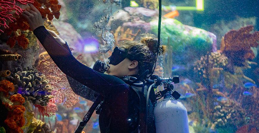 A researcher tends to corals in a Birch Aquarium at Scripps exhibit.