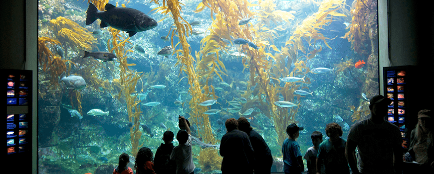 Silhouettes of people in front of Birch Aquarium's Giant Kelp Forest tank