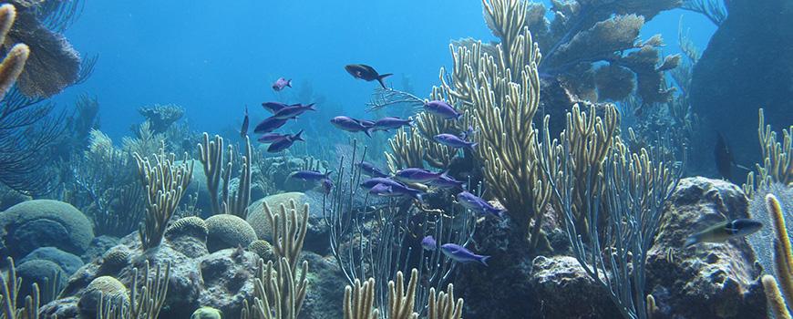 Hog Reef_Bermuda Corals_Scripps Oceanography