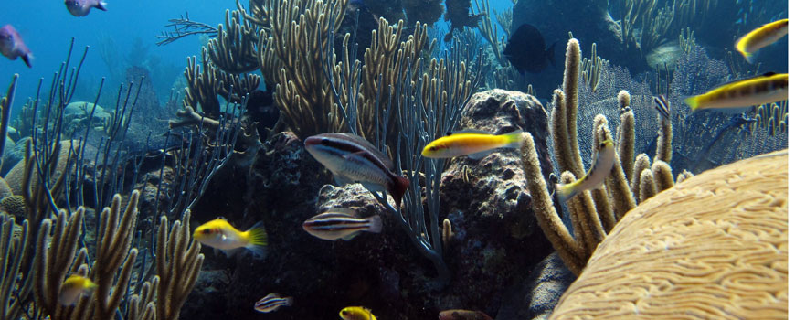 Bermuda coral reef. Photo: Andrew Collins/BIOS