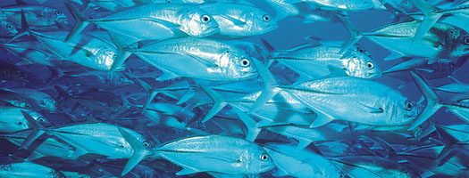 Seafood Stewardship Questionable: UBC-Scripps Experts