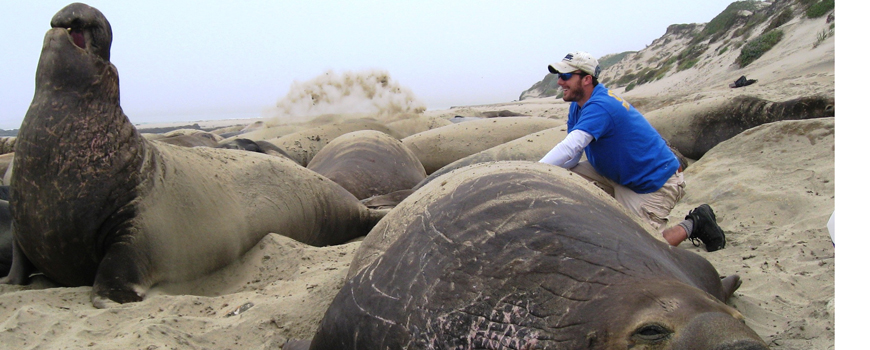 Michael Tift and elephant seals