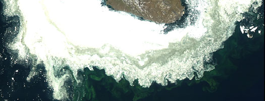 Scripps Oceanography Researchers Discover Arctic Blooms Occurring Earlier