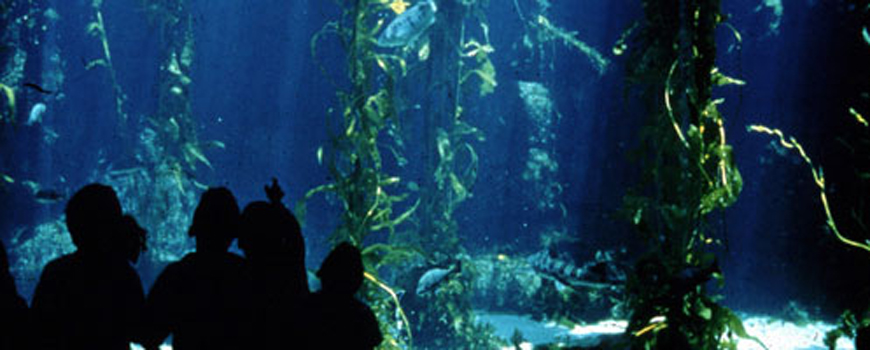 Acclaimed Photographer to Make Special Dive at Birch Aquarium at Scripps