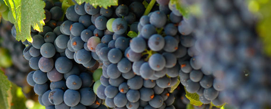 Research Highlight: Grape Expectations