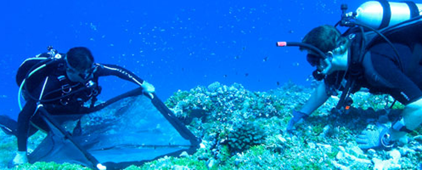 Media Advisory: Overfishing and Ecosystem Resilience: AAAS News Briefing