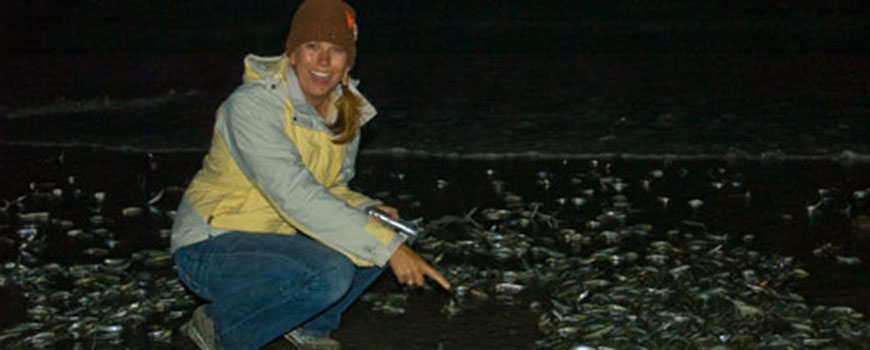 Grunion spawn on the beaches of La Jolla