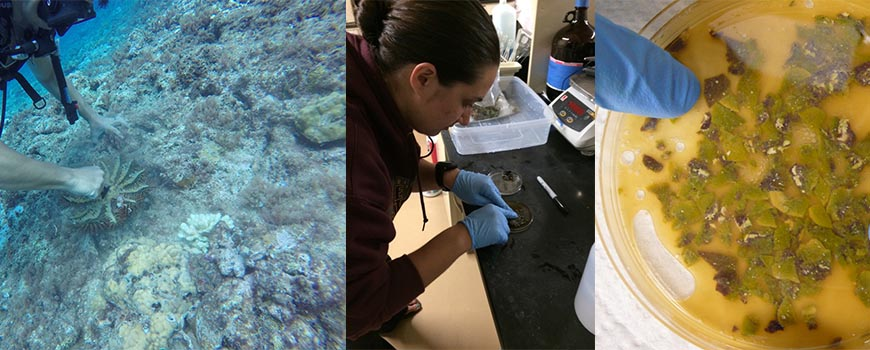 Researchers used genome mining and DNA sequencing to study bacteria found in marine sponges. Credit: Jason S. Biggs