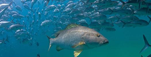 Una Asombrosa Área Natural Protegida en México es la Reserva Marina más Robusta del Mundo