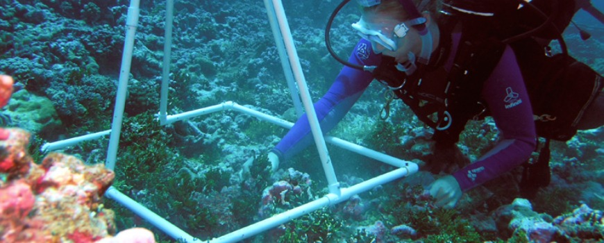 A woman in scuba gear inspecting coral.