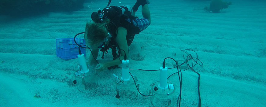 Scripps researcher Tyler Cyronak and test chambers in a study of ocean acidification effects on coral reef sediments in Bermuda