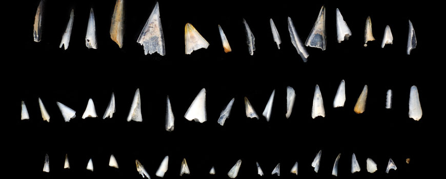 Fish teeth from Pacific Ocean sediments. Imaged with the Macropod by Mark Smith and Daniel Saftner of Macroscopic Solutions
