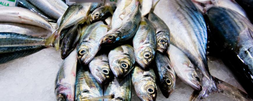 Study Finds Toxic Pollutants in Fish Across the World's Oceans