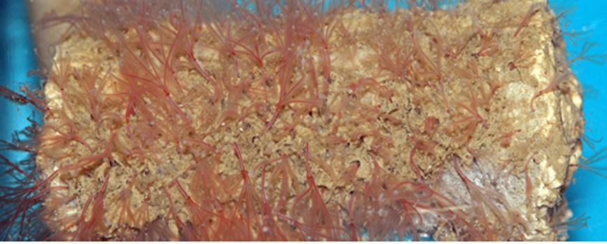 Bone Worms