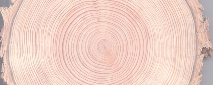 Tree rings reveal detailed 700-year history of El Niño
