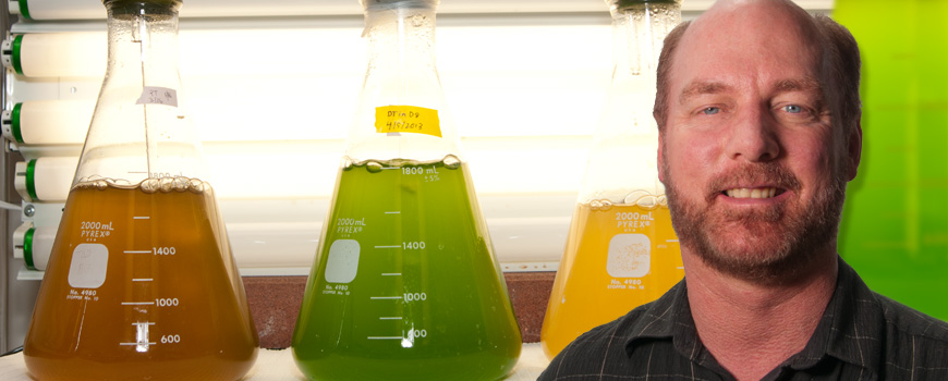 Mark Hildebrand, algal flasks
