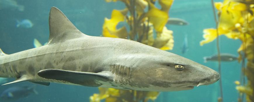 #ILoveSharks at Birch Aquarium at Scripps