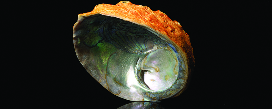 CO2 can make the water more acidic, which would impact the ability of organisms like abalone to make carbonate skeletons.