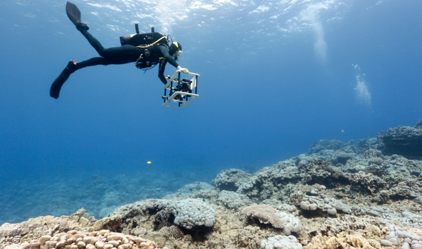 Coral reef researchers canvas a reef in Palmyra.