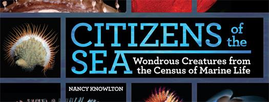 Census of Marine Life Researcher, Author to Speak at Birch Aquarium at Scripps