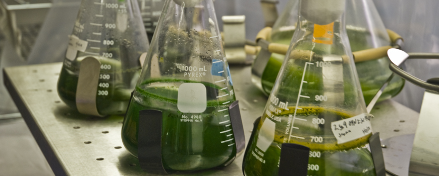 System Using Algae to Capture Carbon Dioxide from Natural Gas Equipment and Power Plants