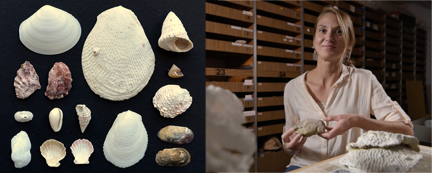 Scripps Oceanography researcher Katie Cramer and the molluscs used in the study.