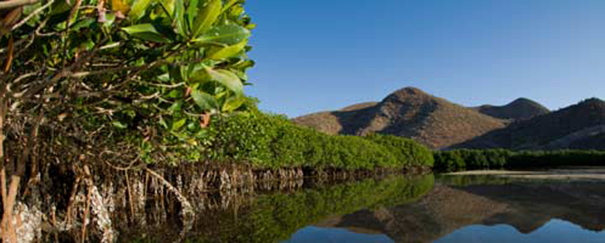 Scripps Study Sets High Economic Value on Threatened Mexican Mangroves
