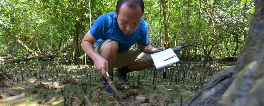 Osamu Miura searches for marine horn snails in Bique, Panama.