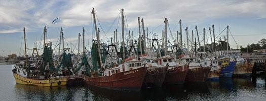 Estudio demuestra la conexión entre Ecosistemas y la Pesca en el Noroeste de México