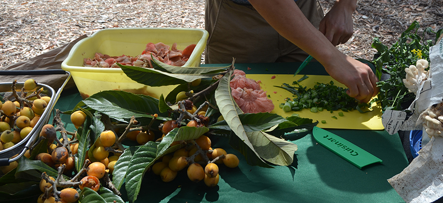 Loquats, oyster mushrooms and mustard greens from Roger's Community Garden, the new destination for Scripps compost