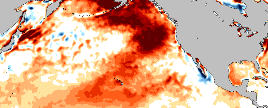 Satellite measurements of SSTs, averaged during June-Aug. of 2019. Reds are warmer than normal, blue are colder than normal.