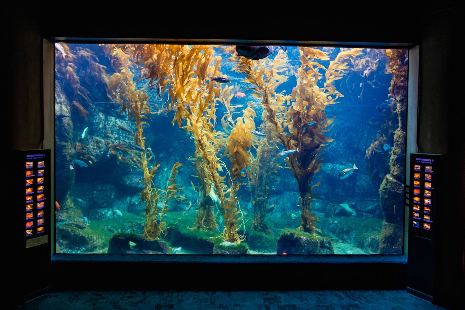 Birch Aquarium at Scripps Kelp Forest